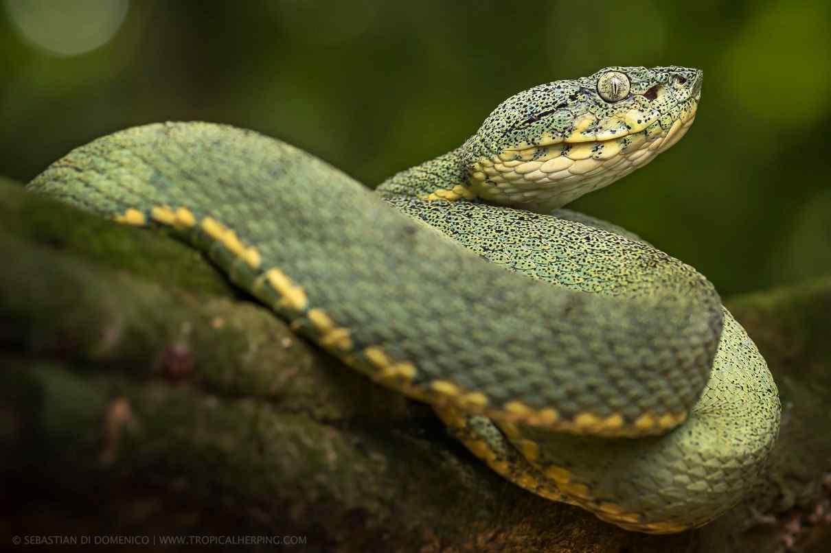 Imagen seleccionada para comportamiento de las serpientes