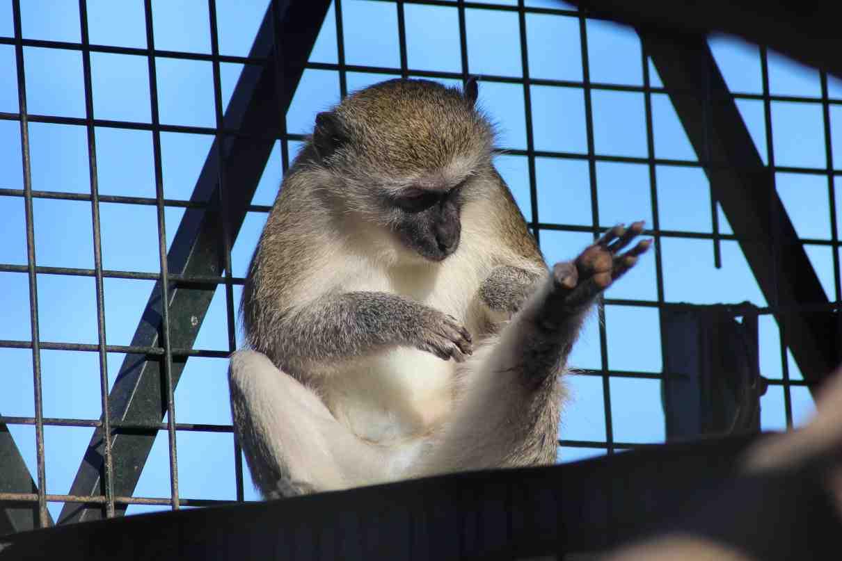 Comportamiento de los primates