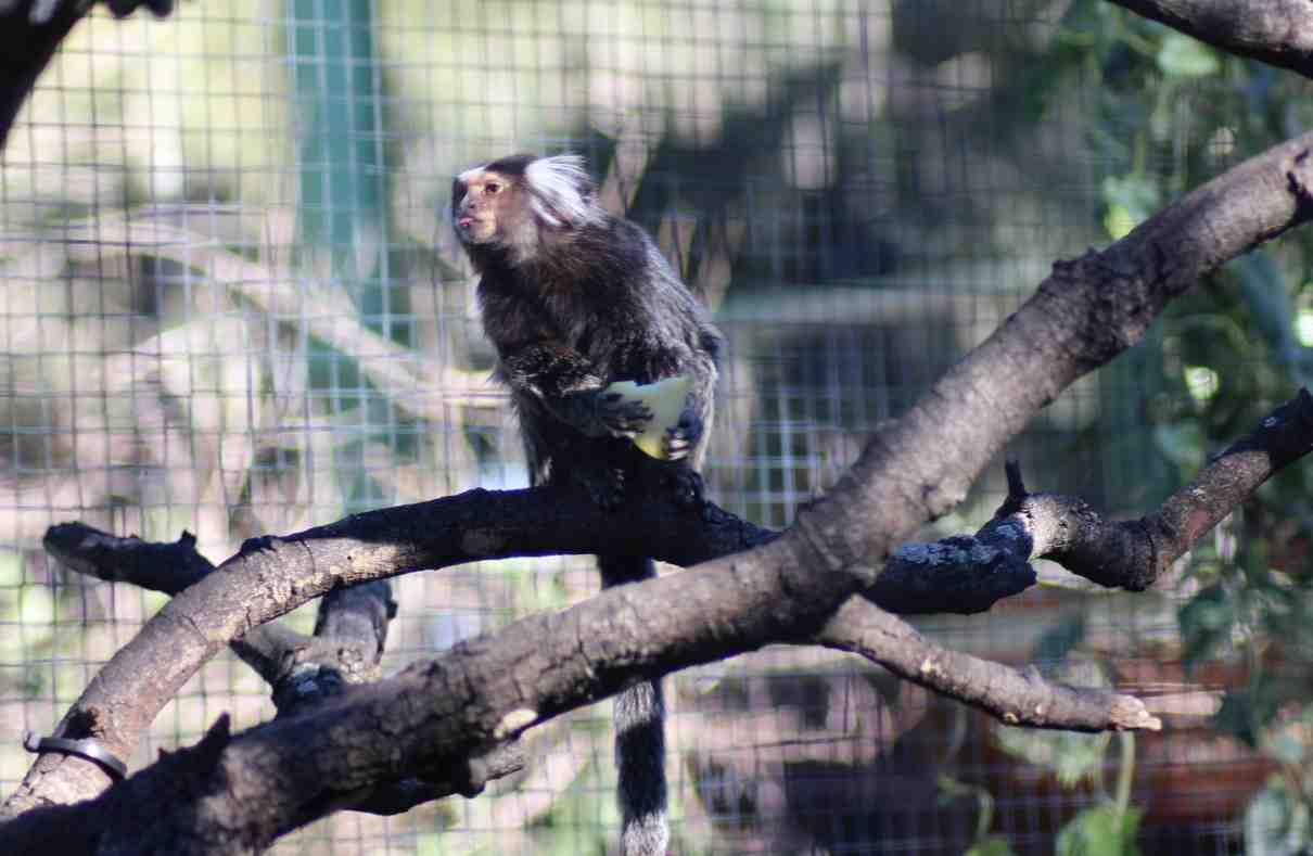 Primates de Sudamérica