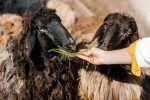 Comportamiento innato en los animales, factores desencadenantes y tipos