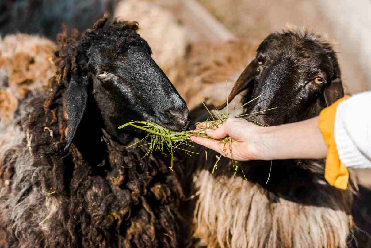 Comportamiento innato en los animales