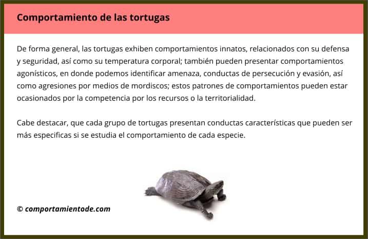 Resumen sobre el comportamiento de las tortugas