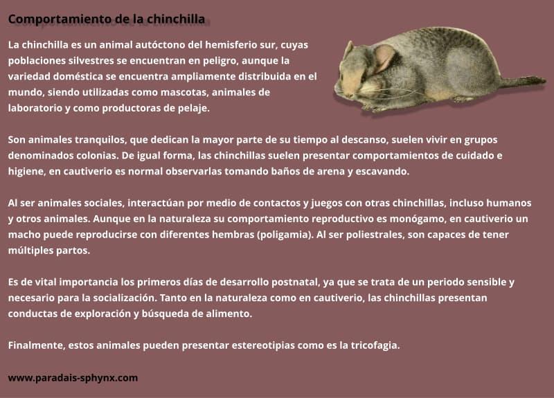 Resumen sobre el comportamiento de las chinchillas